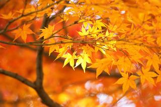 autumn-leaves_00020.jpg